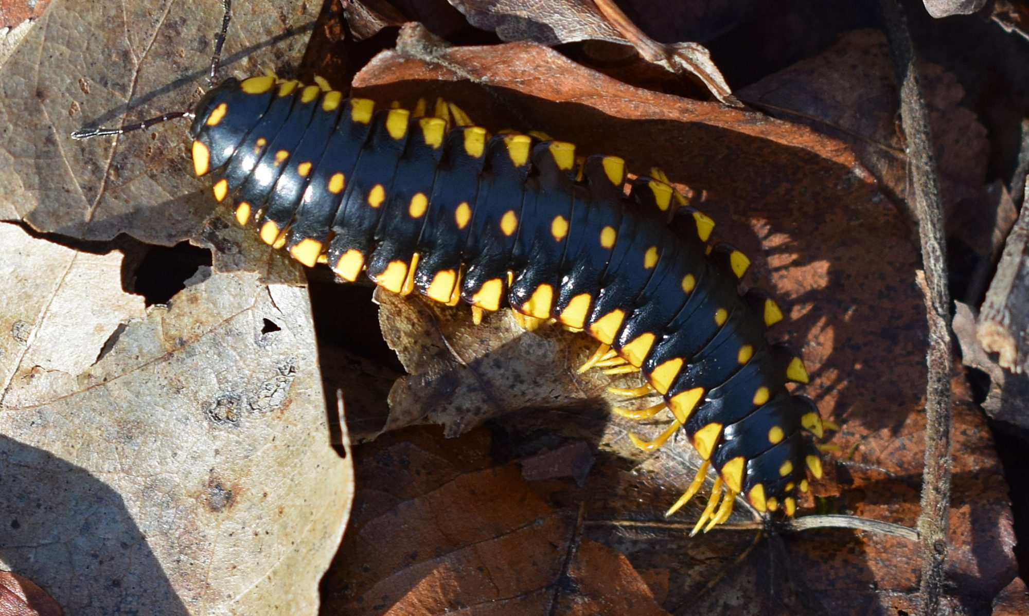 Arthopods & Invertebrates